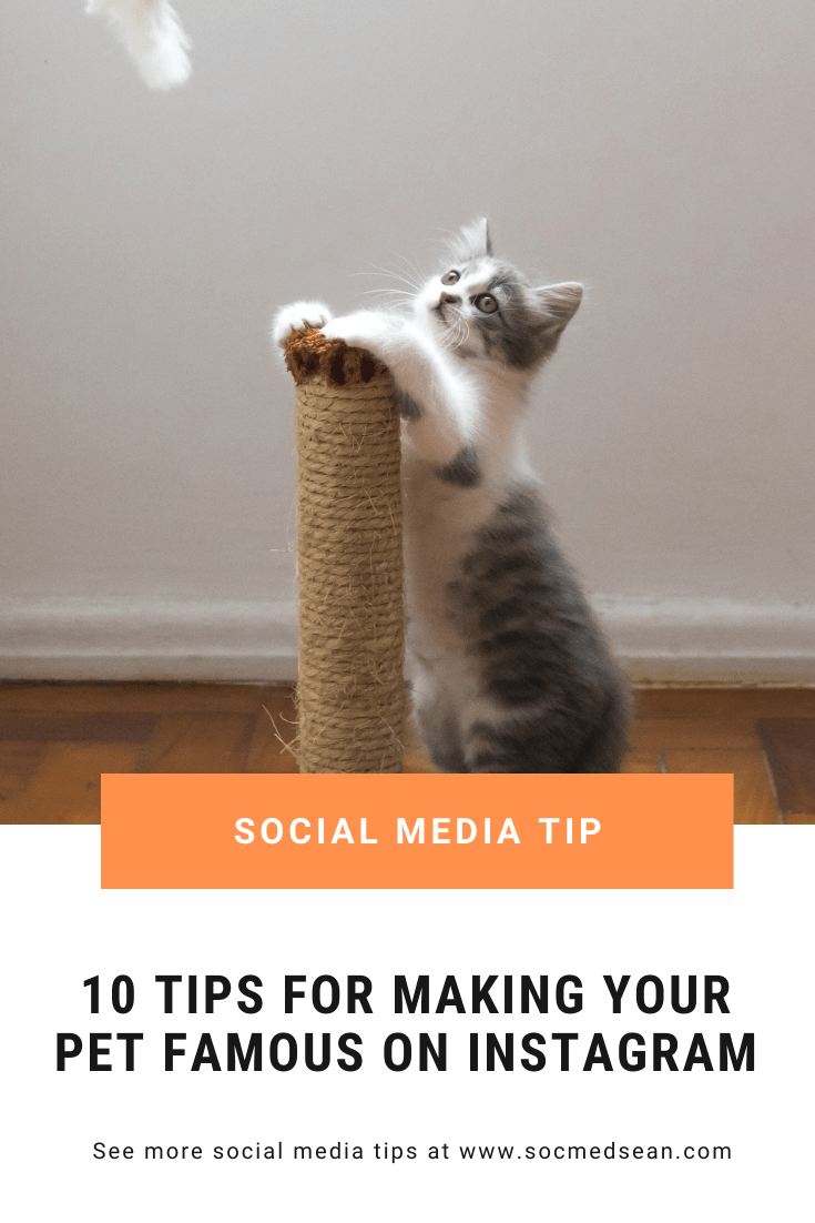 Tips for making your pet-focused Instagram account famous