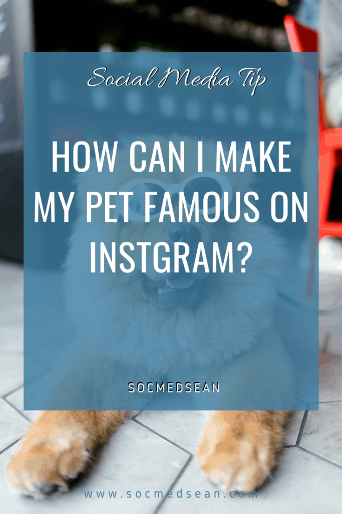 10 Tips For Making Your Pet Famous On Instagram